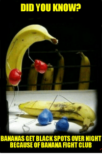 Banana: DID YOU KNOW?  BANANAS GET BLACKSPOTS OVER NIGHT  BECAUSE OF BANANA FIGHT CLUB