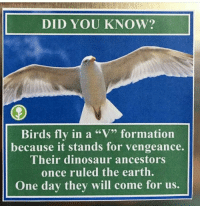 "Dinosaur, Memes, and Formation: DID YOU KNOW?  Birds fly in a ""V"" formation  because it stands for vengeance.  Their dinosaur ancestors  once ruled the earth.  One day they will come for us."