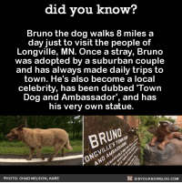 Every town needs a Bruno!  Get free Did You Know(s) via email ➡ http://goo.gl/iRFFE7: did you know?  Bruno the dog walks 8 miles a  day just to visit the people of  Longville, MN. Once a stray, Bruno  was adopted by a suburban couple  and has always made daily trips to  town. He's also become a local  celebrity, has been dubbed 'Town  Dog and Ambassador, and has  his very own statue.  BRUNO.  DIDYOUKNOWBLOG.coM  PHOTO: CHAD NELSON, KARE Every town needs a Bruno!  Get free Did You Know(s) via email ➡ http://goo.gl/iRFFE7