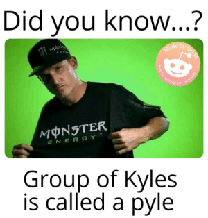 And thats a fact: Did you know...?  by reddif  Made  Not for instagram  normies  MONSTER  ENERGY  Group of Kyles  is called a pyle And thats a fact