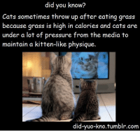 Cats, Love, and Pressure: did you know?  Cats sometimes throw up after eating grass  because grass is high in calories and cats are  under a lot of pressure from the media to  maintain a kitten-like physique  did-yuo-kno.tumblr.com the-absolute-funniest-posts:  Follow this blog, you will love it on your dashboard