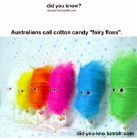 "Beard, Candy, and Food: did you know?  did-you-kno.tumblr.com  Australians call cotton candy ""fairy floss"".  did-you-kno.tumblr.com winderpsoldier:  iam-super-wholocked:  nordicice:  quitsexingmyunicorn:  the-trickster-and-the-optimist:  immortaliarty:  peetamellarksbuns:  unicornwright:  photonsandfrisbees:  what the f*** is cotton candy   O.O  why would you call it cotton? It's food. Not some material.  No, you are all wrong. It is called candy floss.   SUGAR SPIDER   The French call it "" barbe à papa"" - which means ""Daddy's beard""  okay so what i have learned from this post is that other countries are really f***ing weird  Directly translated from Norwegian it's 'sugar spin', which makes sense when you think about it  some parts in India, its called,""Gudiya ke baal"" which literally translates to a doll's hair.  In Finland it is called ""hattara"" which makes no sense whatsoever."