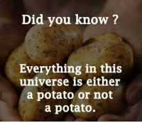 Facts, Irish, and Winter: Did you know?  Everything in this  universe is either  a potato or not  a potato. In Irish winter few facts matter