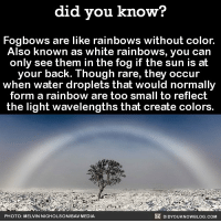 Amazon, Anaconda, and Apple: did you know?  Fogbows are like rainbows without color  Also known as white rainbows, you can  only see them in the fog if the sun is at  your back. Though rare, they occur  when water droplets that would normally  form a rainbow are too small to reflect  the light wavelengths that create colors.  PHOTO: MELVIN NICHOLSONIBAV MEDIA  DIDYOUKNOWBLOG.COM 100% would love to see this in real life 👀😍 fogbow weather rain cool 📢 Share the knowledge! Tag your friends in the comments. ➖➖➖➖➖➖➖➖➖➖➖ Want more Did You Know(s)? ➡📓 Buy our book on Amazon: [LINK IN BIO] ➡📱 Download our App: http:-apple.co-2i9iX0u ➡📩 Get daily text message alerts: http:-Fact-Snacks.com ➡📩 Free email newsletter: http:-DidYouKnowFacts.com-Sign-Up- ➖➖➖➖➖➖➖➖➖➖➖ We post different content across our channels. Follow us so you don't miss out! 📍http:-facebook.com-didyouknowblog 📍http:-twitter.com-didyouknowfacts ➖➖➖➖➖➖➖➖➖➖➖ DYN FACTS TRIVIA TIL DIDYOUKNOW NOWIKNOW