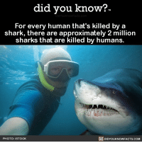Well when you put it this way 😥 sharks shark wow crazy 📢 Share the knowledge! Tag your friends in the comments. ➖➖➖➖➖➖➖➖➖➖➖ Want more Did You Know(s)? ➡📓 Buy our book on Amazon: [LINK IN BIO] ➡📱 Download our App: http:-apple.co-2i9iX0u ➡📩 Get daily text message alerts: http:-Fact-Snacks.com ➡📩 Free email newsletter: http:-DidYouKnowFacts.com-Sign-Up- ➖➖➖➖➖➖➖➖➖➖➖ We post different content across our channels. Follow us so you don't miss out! 📍http:-facebook.com-didyouknowblog 📍http:-twitter.com-didyouknowfacts ➖➖➖➖➖➖➖➖➖➖➖ DYN FACTS TRIVIA TIL DIDYOUKNOW NOWIKNOW: did you know?  For every human that's killed by a  shark, there are approximately 2 million  sharks that are killed by humans.  PHOTO: ISTOCK  DIDYOUKNOWFACTS.COM Well when you put it this way 😥 sharks shark wow crazy 📢 Share the knowledge! Tag your friends in the comments. ➖➖➖➖➖➖➖➖➖➖➖ Want more Did You Know(s)? ➡📓 Buy our book on Amazon: [LINK IN BIO] ➡📱 Download our App: http:-apple.co-2i9iX0u ➡📩 Get daily text message alerts: http:-Fact-Snacks.com ➡📩 Free email newsletter: http:-DidYouKnowFacts.com-Sign-Up- ➖➖➖➖➖➖➖➖➖➖➖ We post different content across our channels. Follow us so you don't miss out! 📍http:-facebook.com-didyouknowblog 📍http:-twitter.com-didyouknowfacts ➖➖➖➖➖➖➖➖➖➖➖ DYN FACTS TRIVIA TIL DIDYOUKNOW NOWIKNOW