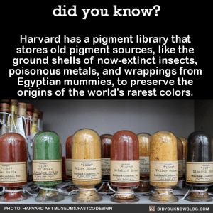 "America, Bodies , and Food: did you know?  Harvard has a pigment library thait  stores old pigment sources, like the  ground shells of now-extinct insects  poisonous metals, and wrappings from  Egyptian mummies, to preserve the  origins of the world's rarest colors.  2109  cr Green  1003*  #1065  1067  ed Oxide  ellow Oohre  897  Tellow Oahre  talio s  Coulston,  Reichard Coula  PHOTO: HARVARD ART MUSEUMS/FASTCODESIGN  DIDYOUKNOWBLOG.COM re-pu-ta-tion: zigster-ao3:  did-you-kno:  Harvard has a pigment library that  stores old pigment sources, like the  ground shells of now-extinct insects,  poisonous metals, and wrappings from  Egyptian mummies, to preserve the  origins of the world's rarest colors. A few centuries ago, finding a specific color might have meant trekking across the globe to a mineral deposit in the middle of Afghanistan. ""Every pigment has its own story,"" Narayan Khandekar, the caretaker of the pigment collection, told Fastcodesign. He also shared the stories of some of the most interesting pigments in the collection.      Mummy Brown ""People would harvest mummies from Egypt and then extract the brown resin material that was on the wrappings around the bodies and turn that into a pigment. It's a very bizarre kind of pigment, I've got to say, but it was very popular in the 18th and 19th centuries.""     Cadmium Yellow  ""Cadmium yellow was introduced in the mid 19th century. It's a bright yellow that many impressionists used. Cadmium is a heavy metal, very toxic. In the early 20th century, cadmium red was introduced. You find these pigments used in industrial processes. Up until the 1970s, Lego bricks had cadmium pigment in them.""    Annatto""The lipstick plant—a small tree, Bixa orellana, native to Central and South America—produces annatto, a natural orange dye. Seeds from the plant are contained in a pod surrounded with a bright red pulp. Currently, annatto is used to color butter, cheese, and cosmetics."" Lapis Lazuli""People would mine it in Afghanistan, ship it across Europe, and it was more expensive than gold so it would have its own budget line on a commission."" Dragon's Blood""It has a great name, but it's not from dragons. [The bright red pigment] is from the rattan palm."" Cochineal""This red dye comes from squashed beetles, and it's used in cosmetics and food."" Emerald Green ""This is made from copper acetoarsenite. We had a Van Gogh with a bright green background that was identified as emerald green. Pigments used for artists' purposes can find their way into use in other areas as well. Emerald green was used as an insecticide, and you often see it on older wood that would be put into the ground, like railroad ties."" Source  This is pure alchemy. I love it!    If you know how much I love colors you know how much I'm freaking out right now. I WANT TO BE THERE"
