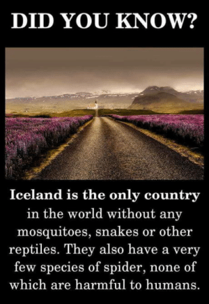 Club, Spider, and Tumblr: DID YOU KNOW?  Iceland is the only country  in the world without any  mosquitoes, snakes or other  reptiles. They also have a very  few species of spider, none of  which are harmful to humans. laughoutloud-club:  Whiskey, Anyone?
