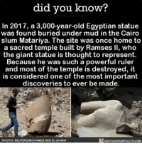 Memes, Cool, and Free: did you know?  In 2017, a 3,000-year-old Egyptian statue  was found buried under mud in the Cairo  slum Matariya. The site was once home to  a sacred temple built by Ramses ll, who  the giant statue is thought to represent.  Because he was such a powerful ruler  and most of the temple is destroyed, it  is considered one of the most important  discoveries to ever be made.  DIDYOUKNOWFACTs.coM  PHOTO: REUTERS MOHAMMED ABDEL GHANY So cool! 👍🏼 statue history Egypt ➡📱Download our free App: [LINK IN BIO]