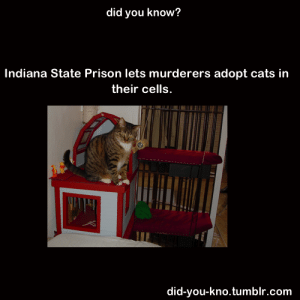 "Cats, Pop, and Soda: did you know?  Indiana State Prison lets murderers adopt cats in  their cells.  did-you-kno.tumblr.com wildphilosoraptor:  fuckyeah-nerdery:  catbountry:  ex-wife:  did-you-kno:  Source   ""When I got my first cat, it changed me. There is something about holding a cat that makes your anger melt away. And if someone does something that upsets me—I have to remember my cat. I can't keep my cat if I get into trouble.""  ""I asked if Major Cabanaw had concerns for the safety of the cats. ""Of course, we always want to ensure the safety of the cats, and the staff is great about keeping an eye out for them. But mostly, it's the offenders keeping them safe. I have never once seen an offender kill his own cat. We screen them to be sure they have no history of animal abuse. But I'll tell you this, there was a guy killed in here because he had spit soda pop onto someone else's cat."""" Wow.  Cats now control the prisons. They now have an army.  This post went exactly where I expected. Well done."