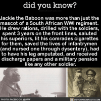 Amazon, Facebook, and Lit: did you know?  Jackie the Baboon was more than just the  mascot of a South African WWl regiment.  He drew rations, drilled with the soldiers,  spent 3 years on the front lines, saluted  his superiors, lit his comrades cigarettes  for them, saved the lives of infantrymen  (and nursed one through dysentery), had  to have his leg amputated, and received  discharge papers and a military pension  like any other soldier.  PHOTO: FACEBOOK, @LITPF  DIDYOUKNOWFACTS.coM Wait, what? 🐒 monkey monkeyseemonkeydo interesting history war ➡️📓 Buy our book on Amazon: [LINK IN BIO]