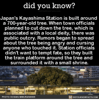 "Tumblr, Blog, and Http: did you know?  Japan's Kayashima Station is built around  a 700-vear-old tree. When town officials  planned to cut down the tree, which is  associated with a local deity, there was  public outcry. Rumors began to spread  about the tree being angry and cursin  anyone who touched it. Station officials  didn't want to tempt fate, so they built  the train platform around the tree and  surrounded it with a small shrine.  PHOTO: KOSAKU MIMURA/NIKKE  DIDYOUKNOWFACTS.CoM <p><a href=""http://didyouknowblog.com/post/158719101556/japans-kayashima-station-is-built-around-a"" class=""tumblr_blog"">did-you-kno</a>:</p> <blockquote> <p>Japan's Kayashima Station is built around  a 700-year-old tree. When town officials  planned to cut down the tree, which is  associated with a local deity, there was  public outcry. Rumors began to spread  about the tree being angry and cursing  anyone who touched it. Station officials  didn't want to tempt fate, so they built  the train platform around the tree and  surrounded it with a small shrine.  <a href=""http://www.spoon-tamago.com/2017/01/21/kayashima-the-japanese-train-station-built-around-a-700-year-old-tree/"">Source</a> <a href=""http://mymodernmet.com/kayashima-station-camphor-tree/"">Source 2</a> <a href=""http://www.atlasobscura.com/places/kayashima-station"">Source 3</a></p> <figure class=""tmblr-full"" data-orig-height=""339"" data-orig-width=""540""><img src=""https://78.media.tumblr.com/6db5d29da101ddfaf26022f04de5b681/tumblr_inline_on74fjj7621uy8wg3_540.jpg"" data-orig-height=""339"" data-orig-width=""540""/></figure><figure class=""tmblr-full"" data-orig-height=""403"" data-orig-width=""540""><img src=""https://78.media.tumblr.com/add8874ad450eeefd38d59773a5c0daf/tumblr_inline_on74fjyMYv1uy8wg3_540.jpg"" data-orig-height=""403"" data-orig-width=""540""/></figure><figure class=""tmblr-full"" data-orig-height=""359"" data-orig-width=""540""><img src=""https://78.media.tumblr.com/6884871ae50eed2103c666942ea81536/tumblr_inline_on74fkVp341uy8wg3_540.jpg"" data-orig-height=""359"" data-orig-width=""540""/></figure><figure class=""tmblr-full"" data-orig-height=""360"" data-orig-width=""540""><img src=""https://78.media.tumblr.com/84109a84e6f3c7e208adb9314d02d7de/tumblr_inline_on74fl3g3T1uy8wg3_540.jpg"" data-orig-height=""360"" data-orig-width=""540""/></figure><figure class=""tmblr-full"" data-orig-height=""405"" data-orig-width=""540""><img src=""https://78.media.tumblr.com/bda0bdb89828a2c1f0f0b311be9af4a7/tumblr_inline_on74flgra11uy8wg3_540.jpg"" data-orig-height=""405"" data-orig-width=""540""/></figure><figure class=""tmblr-full"" data-orig-height=""344"" data-orig-width=""540""><img src=""https://78.media.tumblr.com/6dfa91addc768a5c8211dcb55d7f6a3e/tumblr_inline_on74fmKFrz1uy8wg3_540.jpg"" data-orig-height=""344"" data-orig-width=""540""/></figure></blockquote>"