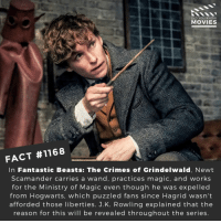 Have you seen Fantastic Beast's yet?📽️🎬 • • • • Double Tap and Tag someone who needs to know this 👇 All credit to the respective film and producers. Movie Movies Film TV Cinema MovieNight Hollywood Netflix harrypotter fantasticbeasts eddieredmayne crimesofgrindelwald jkrowling hogwarts: DID YOU KNOW  MOVIES  FACT #1168  In Fantastic Beasts: The Crimes of Grindelwald, Newt  Scamander carries a wand, practices magic, and works  for the Ministry of Magic even though he was expelled  from Hogwarts, which puzzled fans since Hagrid wasn't  afforded those liberties. J.K. Rowling explained that the  reason for this will be revealed throughout the series Have you seen Fantastic Beast's yet?📽️🎬 • • • • Double Tap and Tag someone who needs to know this 👇 All credit to the respective film and producers. Movie Movies Film TV Cinema MovieNight Hollywood Netflix harrypotter fantasticbeasts eddieredmayne crimesofgrindelwald jkrowling hogwarts
