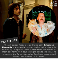 Apparently, Cats, and Friends: DID YOU KNOW  MOVIES  FACT #1169  The cat person Freddie is portrayed as in Bohemian  Rhapsody is apparently close to reality. In his biography  written by Lesley-Ann Jones, friends state that he would  often call home from tour asking to talk to the cats, and  make sure the TV was turned on for shows broadcasted  live so that the cats could watch 📽️🎬 • • • • Double Tap and Tag someone who needs to know this 👇 All credit to the respective film and producers. Movie Movies Film TV Cinema MovieNight Hollywood Netflix bohemianrhapsody queen freddiemercury ramimalek