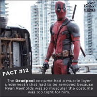 YES RYAN! -👇👇👇👇 Follow @deadpoolfacts for your daily Deadpool dose. -👏👏👏👏 @vancityreynolds 🙌 wadewilson mercwithamouth marvelnation deadpoolfacts deadpoolnation deadpool marvel deadpool2 antihero lolz lmaobruh hahaha lmfao heh hehe MarvelousJokes: DID YOU KNOW  MOVIES  FACT #12  The Deadpool costume had a muscle layer  underneath that had to be removed because  Ryan Reynolds was so muscular the costume  was too tight for him YES RYAN! -👇👇👇👇 Follow @deadpoolfacts for your daily Deadpool dose. -👏👏👏👏 @vancityreynolds 🙌 wadewilson mercwithamouth marvelnation deadpoolfacts deadpoolnation deadpool marvel deadpool2 antihero lolz lmaobruh hahaha lmfao heh hehe MarvelousJokes