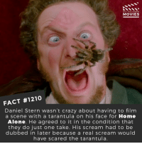 What is your favorite festive movie?📽️🎬 • • • • Double Tap and Tag someone who needs to know this 👇 All credit to the respective film and producers. Movie Movies Film TV Cinema MovieNight Hollywood Netflix homealone festive holidays: DID YOU KNOW  MOVIES  FACT #1210  Daniel Stern wasn't crazy about having to film  a scene with a tarantula on his face for Home  Alone. He agreed to it in the condition that  they do just one take. His scream had to be  dubbed in later because a real scream would  have scared the tarantula. What is your favorite festive movie?📽️🎬 • • • • Double Tap and Tag someone who needs to know this 👇 All credit to the respective film and producers. Movie Movies Film TV Cinema MovieNight Hollywood Netflix homealone festive holidays