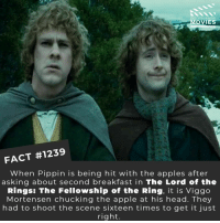 Apple, Head, and Memes: DID YOU KNOw  MOVIES  FACT #1239  When Pippin is being hit with the apples after  asking about second breakfast in The Lord of the  Rings: The Fellowship of the Ring, it is Viggo  Mortensen chucking the apple at his head. They  had to shoot the scene sixteen times to get it just  right. 📽️🎬 • • • • Double Tap and Tag someone who needs to know this 👇 All credit to the respective film and producers. Movie Movies Film TV Cinema MovieNight Hollywood Netflix tlotr lordoftherings fellowshipoftherings pippin