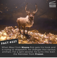 Animals, Dwayne Johnson, and Frozen: DID YOU KNOW  MOVIES  FACT #227  When Maui from Moana first gets his hook and  is trying to shapeshift, he changes into various  animals. For a split second, he turns into Sven  the Reindeer from Frozen. Do you think Dwayne Johnson can sing? 🎥 . . . . All credit to the respective film and producers. movie movies film tv camera cinema fact didyouknow moviefacts cinematography screenplay director actor actress act acting movienight cinemas watchingmovies hollywood bollywood didyouknowmovies