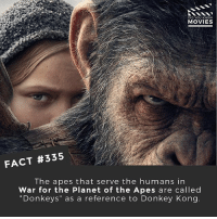 """Donkey, Memes, and Movies: DID YOU KNOW  MOVIES  FACT #335  The apes that serve the humans in  War for the Planet of the Apes are called  """"Donkeys"""" as a reference to Donkey Kong Have you seen War for the Planet of the Apes yet? 🎥 • • • • Double Tap and Tag someone who needs to know this 👇 All credit to the respective film and producers. movie movies film tv camera cinema fact didyouknow moviefacts cinematography screenplay director actor actress act acting movienight cinemas watchingmovies hollywood bollywood didyouknowmovies"""
