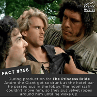 "André the Giant, Beer, and Drunk: DID YOU KNOW  MOVIES  FACT #358  During production for The Princess Bride  Andre the Giant got so drunk at the hotel bar  he passed out in the lobby. The hotel staff  couldn't move him, so they put velvet ropes  around him until he woke up INCONCIEVABLE! ""He kept a flask of cognac in his costume, but his favorite drink was a monstrosity called ""the American,"" a 40-ounce beer pitcher filled with whatever booze he felt like that day: merlot, brandy, beer, vodka, whatever. The first time Andre the Giant and Robin Wright went out for dinner, he ordered four appetizers, five entrees and a case of wine."" 🎥 • • • • Double Tap and Tag someone who needs to know this 👇 All credit to the respective film and producers. movie movies film tv camera cinema fact didyouknow moviefacts cinematography screenplay director actor actress act acting movienight cinemas watchingmovies hollywood bollywood didyouknowmovies"