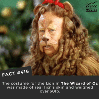 "Anaconda, Apparently, and Memes: DID YOU KNOW  MOVIES  FACT #416  The costume for the Lion in The Wizard of Oz  was made of real lion's skin and weigheo  over 60lb. ""There were two people on set whose sole job it was to dry out to the Cowardly Lion costume every night. It apparently ""reeked"" because Bert Lahr sweated so much in the 90- or 100-pound costume under the 100 degree lights"" 😷 🎥 • • • • Double Tap and Tag someone who needs to know this 👇 All credit to the respective film and producers. movie movies film tv camera cinema fact didyouknow moviefacts cinematography screenplay director actor actress act acting movienight cinemas watchingmovies hollywood bollywood didyouknowmovies"