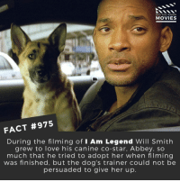 Dogs, Love, and Memes: DID YOU KNOW  MOVIES  FACT #975  During the filming of I Am Legend Will Smith  grew to love his canine co-star, Abbey. so  much that he tried to adopt her when filming  was finished, but the dog's trainer could not be  persuaded to give her up Which movie never fails to make you cry? 🎬🎥 • • • • Double Tap and Tag someone who needs to know this 👇 All credit to the respective film and producers. Movie Movies Film TV Cinema MovieNight Hollywood Iamlegend willsmith dog doggo zombie tearjerker