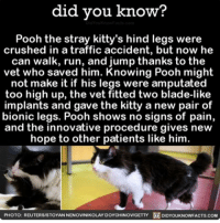 Blade runner. 🐱 awesome cats catsofinstagram ➡📱Download our free App: [LINK IN BIO]: did you know?  Pooh the stray kitty's hind legs were  crushed in a traffic accident, but now he  can walk, run, and jump thanks to the  vet who saved him. Knowing Pooh might  not make it if his legs were amputated  too high up, the vet fitted two blade-like  implants and gave the kitty a new pair of  bionic legs. Pooh shows no signs of pain,  and the innovative procedure gives new  hope to other patients like him.  PHOTO: REUTERS/STOYANNENOVINIKOLAY DOYCHINOVIGETTY DIDYOUKNOWFACTS.coM Blade runner. 🐱 awesome cats catsofinstagram ➡📱Download our free App: [LINK IN BIO]