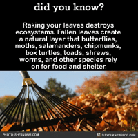 Oh...😳🍁🍂 leaves falling leaves fall 📢 Share the knowledge! Tag your friends in the comments. ➖➖➖➖➖➖➖➖➖➖➖ Want more Did You Know(s)? ➡📓 Buy our book on Amazon: [LINK IN BIO] ➡📱 Download our App: http:-apple.co-2i9iX0u ➡📩 Get daily text message alerts: http:-Fact-Snacks.com ➡📩 Free email newsletter: http:-DidYouKnowFacts.com-Sign-Up- ➖➖➖➖➖➖➖➖➖➖➖ We post different content across our channels. Follow us so you don't miss out! 📍http:-facebook.com-didyouknowblog 📍http:-twitter.com-didyouknowfacts ➖➖➖➖➖➖➖➖➖➖➖ DYN FACTS TRIVIA TIL DIDYOUKNOW NOWIKNOW: did you know?  Raking your leaves destroys  ecosystems. Fallen leaves create  a natural layer that butterflies,  moths, salamanders, chipmunks,  box turtles, toads, shrews,  worms, and other species rely  on for food and shelter.  PHOTO: SHEKNOWS.COM  國DIDYOUKNOWBLOG.COM Oh...😳🍁🍂 leaves falling leaves fall 📢 Share the knowledge! Tag your friends in the comments. ➖➖➖➖➖➖➖➖➖➖➖ Want more Did You Know(s)? ➡📓 Buy our book on Amazon: [LINK IN BIO] ➡📱 Download our App: http:-apple.co-2i9iX0u ➡📩 Get daily text message alerts: http:-Fact-Snacks.com ➡📩 Free email newsletter: http:-DidYouKnowFacts.com-Sign-Up- ➖➖➖➖➖➖➖➖➖➖➖ We post different content across our channels. Follow us so you don't miss out! 📍http:-facebook.com-didyouknowblog 📍http:-twitter.com-didyouknowfacts ➖➖➖➖➖➖➖➖➖➖➖ DYN FACTS TRIVIA TIL DIDYOUKNOW NOWIKNOW