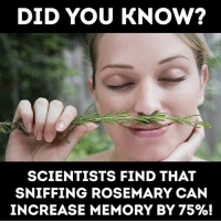 Memes, 🤖, and Can: DID YOU KNOw?  SCIENTISTS FIND THAT  SNIFFING ROSEMARY CAN  INCREASE MEMORY BY 75%! Did you know?