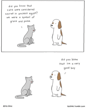 Cats, Tumblr, and Good: did you know that  cats were consi dered  socred in ancient egypt?  we were a symbol of  grace and poise  did you know  that I'm a very  good boy  ® liz climo  lizclimo. tumblr.com He is the goodest of all boys