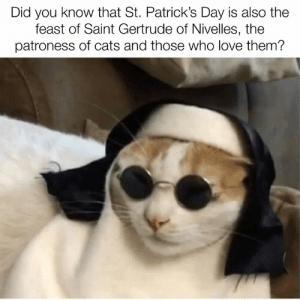 Happy St. Catrick's Day! 🐈☘️: Did you know that St. Patrick's Day is also the  feast of Saint Gertrude of Nivelles, the  patroness of cats and those who love them? Happy St. Catrick's Day! 🐈☘️