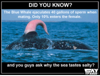 You'll never look at the sea same way again 😒: DID YOU KNOW?  The Blue Whale ejaculates 400 gallons of sperm when  mating. Only 10% enters the female.  and you guys ask why the sea tastes salty? You'll never look at the sea same way again 😒