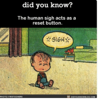 Memes, 🤖, and Human: did you know?  The human sigh acts as a  reset button.  DIDYOUKNowBLOG.coM  PHOTO: FIRSTCOVERS *SIGH* awesome words sigh ➡📱Download our free App: [LINK IN BIO]
