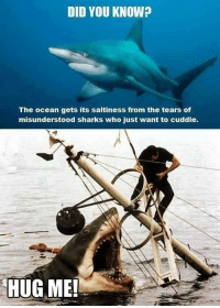 Love, Ocean, and Sharks: DID YOU KNOW?  The ocean gets its saltiness from the tears of  misunderstood sharks who just want to cuddie.  HUG ME! <p>Maybe they just need a little more love.</p>