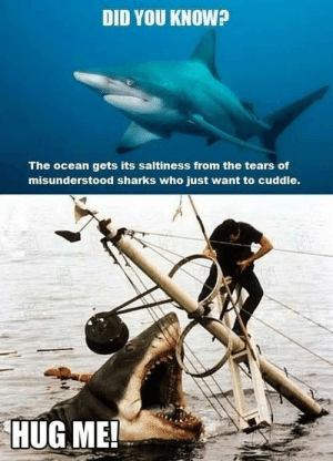 Ocean, Sharks, and Who: DID YOU KNOW?  The ocean gets its saltiness from the tears of  misunderstood sharks who just want to cuddle.  HUG ME!