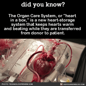 "did-you-kno:    This device allows surgeons to take hearts from donors that formerly wouldn't have been eligible. Possible donors have been limited because hearts were taken from people who were brain-dead but still had healthy bodies. The ""heart in a box"" can reanimate hearts that have stopped beating in bodies that have undergone ""circulatory death,"" where the heart itself is no longer functioning, not just the brain.    Source : did you know?  The Organ Care System, or ""heart  in a box,"" is a new heart-storage  system that keeps hearts warm  and beating while they are transferred  from donor to patient.  nsMedics  O DIDYOUKNOWBLOG.COM  PHOTO: TECHNOLOGYREVIEW.COM did-you-kno:    This device allows surgeons to take hearts from donors that formerly wouldn't have been eligible. Possible donors have been limited because hearts were taken from people who were brain-dead but still had healthy bodies. The ""heart in a box"" can reanimate hearts that have stopped beating in bodies that have undergone ""circulatory death,"" where the heart itself is no longer functioning, not just the brain.    Source"