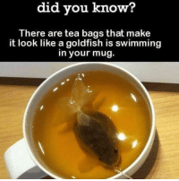 Butthurt, Goldfish, and Memes: did you know?  There are tea bags that make  it look like a goldfish is swimming  in your mug. Follow @8X8AKAK ....& RELAX it's just a meme not my manifesto.. FDT DANK CHESTDAY BUTTHURT VEGANS LEGDAY CROSSFIT MMA BULLY WHITEPEOPLE OCD PIZZA FAMILYGUY DEEZNUTS DANKMEMES TWD FISHING CRAZYPEOPLE COUNTRYGIRL NOCHILL NOFILTER SMOKEWEEDEVERYDAY BABYDADDY ATHEIST FHRITP TRANSGENDER GLBT WHITEGIRLWEDNESDAY MELANIN PRISONWIVES 📦📦 ..I love you all .. 🇧🇹🇧🇴🇰🇭🇧🇳🇧🇼🇧🇯🇦🇺🇦🇶🇦🇴🇦🇩🇩🇯🇪🇬🇫🇮🇬🇲🇬🇱🇬🇩🇫🇰🇬🇮🇬🇭🇬🇺🇪🇬🇪🇺🇨🇺🇭🇹🇬🇾🇬🇼🇭🇺🇮🇪🇮🇳🇮🇷🇮🇹🇮🇱🇮🇲🇮🇪🇮🇶🇯🇪🇽🇰🇰🇮🇯🇲🇰🇪🇱🇧🇰🇼🇰🇿🇱🇷🇲🇴🇱🇾🇱🇮🇱🇹🇱🇺🇲🇴🇱🇷🇱🇸🇱🇧🇱🇻🇱🇦🇲🇺🇾🇹🇲🇽🇫🇲🇲🇩🇲🇷🇲🇶🇲🇹🇲🇹🇲🇱🇵🇸🇵🇼🇵🇰🇴🇲🇳🇴🇳🇬🇳🇺🇰🇵🇲🇵🇳🇷🇳🇦🇲🇲🇲🇿👠💄😩😩📌✂️📏❤️❣️