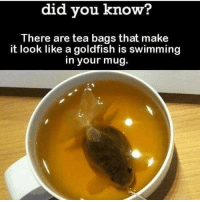 Goldfish, Memes, and Swimming: did you know?  There are tea bags that make  it look like a goldfish is swimming  in your mug.