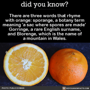 Tumblr, Wikipedia, and Blog: did you know?  There are three words that rhyme  with orange: sporange, a botany term  meaning 'a sac where spores are made'  Gorringe, a rare English surname,  and Blorenge, which is the name of  a mountain in Wales.  PHOTO: PUBLIC DOMAIN  回DIDYOUKNOWFACTS.COM did-you-kno:  There are three words that rhyme with orange: sporange, a botany term meaning 'a sac where spores are made'  Gorringe, a rare English surname, and Blorenge, which is the name of a mountain in Wales.  Source Source 2 Source 3