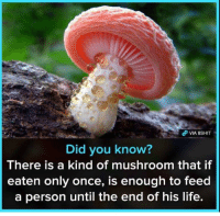 Life, Once, and Mushroom: Did you know?  There is a kind of mushroom that if  eaten only once, is enough to feed  a person until the end of his life. .