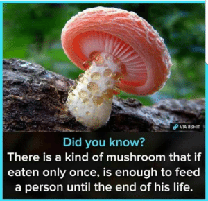 Life, Haha, and Once: Did you know?  There is a kind of mushroom that if  eaten only once, is enough to feed  a person until the end of his life. Haha!