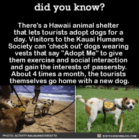 "Animals, Dank, and Animal: did you know?  There's a Hawaii animal shelter  that lets tourists adopt dogs for a  day. Visitors to the Kauai Humane  Society can check out' dogs wearing  vests that say ""Adopt Me"" to give  them exercise and social interaction  and gain the interests of passersby  About 4 times a month, the tourists  themselves go home with a new dog  DIDYouK Now BLOG coM  PHOTO: ACTIVITY KAUAIIANDOBEATTS Brb, going to Hawaii.  Get free Did You Know(s) via email ➡ http://goo.gl/iRFFE7"