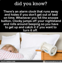 Memes, 🤖, and App: did you know?  There's an alarm clock that runs away  and hides if you don't get out of bed  on time. Whenever you hit the snooze  button, Clockyjumps off your nightstand  and rolls around beeping so you have  to get up and catch it if you want to  turn it off.  PHOTO: NANDA HOME  DIDYOUKNOWFACTS.COM That's going to be a no from me. ⏰ clocks alarm alarmclock funny ➡📱Download our free App: [LINK IN BIO]