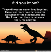 All I thought I knew about dinosaurs is a lie. ☄️🤔 dinosaurs jurassicpark wow crazy evolution ➡️📓 Buy our book on Amazon: [LINK IN BIO]: did you know?  These dinosaurs never lived together.  There was more time between the  existence of the Stegosaurus and  the T. rex than there is between  the T. rex and you.  PHOTO: ISTOCK  DIDYOUKNOWFACTS.COM All I thought I knew about dinosaurs is a lie. ☄️🤔 dinosaurs jurassicpark wow crazy evolution ➡️📓 Buy our book on Amazon: [LINK IN BIO]