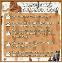 America, Memes, and Heart: DID YOU KNOW/  THIS ABOUT CATS?  Cats sleep for of eir  Iives  Female cats are typically right-pawed.  Males are typically left-pawed.  Cats are more popular than dogs  in America: 88 million cats vs 74  million dogs.  epo Cats make  more than 100 sounds  Dogs only make 10.  your heart  attack risk by more than a third www.myKittyKan.com