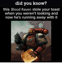 Memes, The Voice, and Fuck: did you know?  this Blood Raven stole your toast  when you weren't looking and  now he's running away with it Fuck them. They stole my toast! ~The Voice