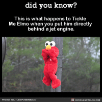 25 Best Tickle Me Elmo Memes Without Memes The Memes