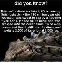 Andrew Bogut, Dinosaur, and Friends: did you know?  This isn't a dinosaur fossil; it's a mummy.  Scientists think the 110 million-year-old  nodosaur was swept to sea by a flooding  river, sank, landed on its back, and was  pressed into the ocean floor. It's so well  preserved that it still has intestines and  weighs 2,500 of its original 3,000 lbs.  PHOTO: INSTAGRAM. QROBERTCLARKPHOTO Eh. Not scary but like dinosaurs are scary right? I've been stuck in my friends camper with 5 year olds for like 6 days kms - julia
