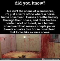nose bleed