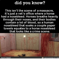 Amazon, Apple, and Bloods: did you know?  This isn'tthe scene of a massacre  it's just a vet's office where a horse  had a nosebleed. Horses breathe heavily  through their noses, and their bodies  contain a lot of blood, so a human  nosebleed that soaks a couple paper  towels equates to a horse nosebleec  that looks like a crime scene.  PHOTO: REDDIT  DIDYOUKNOWBLOG.COM Sweet Jesus. 🙈🐎 horse horses nosebleed veterinarian 📢 Share the knowledge! Tag your friends in the comments. ➖➖➖➖➖➖➖➖➖➖➖ Want more Did You Know(s)? ➡📓 Buy our book on Amazon: [LINK IN BIO] ➡📱 Download our App: http:-apple.co-2i9iX0u ➡📩 Get daily text message alerts: http:-Fact-Snacks.com ➡📩 Free email newsletter: http:-DidYouKnowFacts.com-Sign-Up- ➖➖➖➖➖➖➖➖➖➖➖ We post different content across our channels. Follow us so you don't miss out! 📍http:-facebook.com-didyouknowblog 📍http:-twitter.com-didyouknowfacts ➖➖➖➖➖➖➖➖➖➖➖ DYN FACTS TRIVIA TIL DIDYOUKNOW NOWIKNOW