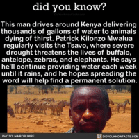 Memes, 🤖, and Hero: did you know?  This man drives around Kenya delivering  thousands of gallons of water to animals  dying of thirst. Patrick Kilonzo Mwalua  regularly visits the Tsavo, where severe  drought threatens the lives of buffalo,  antelope, zebras, and elephants. He says  he'll continue providing water each week  until it rains, and he hopes spreading the  word will help find a permanent solution.  R DIDYOUKNOwnFACTs.coM  PHOTO: NAIROBI WIRE Hero! 🏆 wow amazing savetheanimals animals water ➡📱Download our free App: [LINK IN BIO]